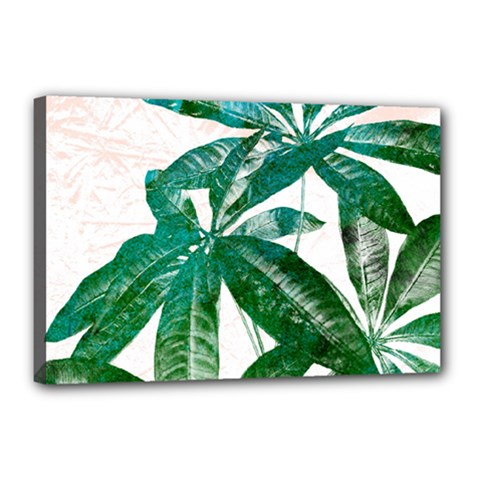 Pachira Leaves  Canvas 18  X 12