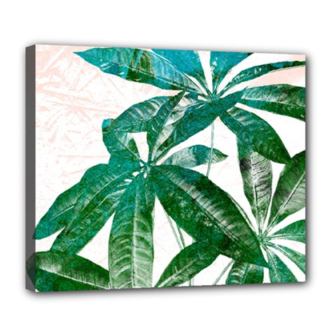 Pachira Leaves  Deluxe Canvas 24  X 20