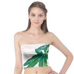 Pachira Leaves  Tube Top