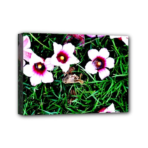 Pink Flowers Over A Green Grass Mini Canvas 7  X 5