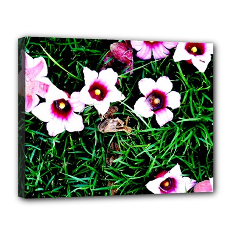 Pink Flowers Over A Green Grass Canvas 14  X 11