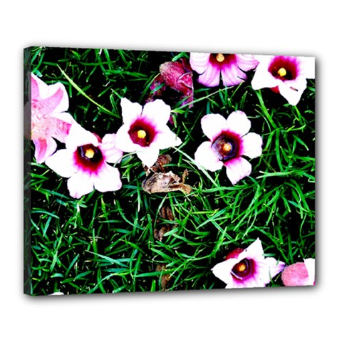 Pink Flowers Over A Green Grass Canvas 20  X 16