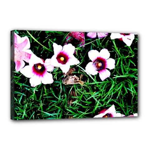Pink Flowers Over A Green Grass Canvas 18  X 12