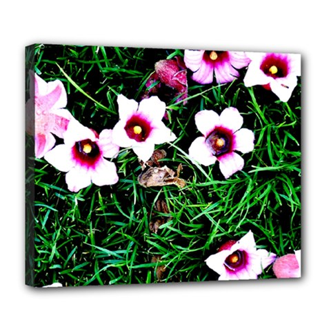 Pink Flowers Over A Green Grass Deluxe Canvas 24  X 20