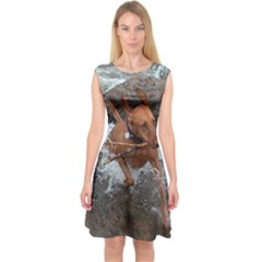 Vizsla Fetching In Water Capsleeve Midi Dress by TailWags