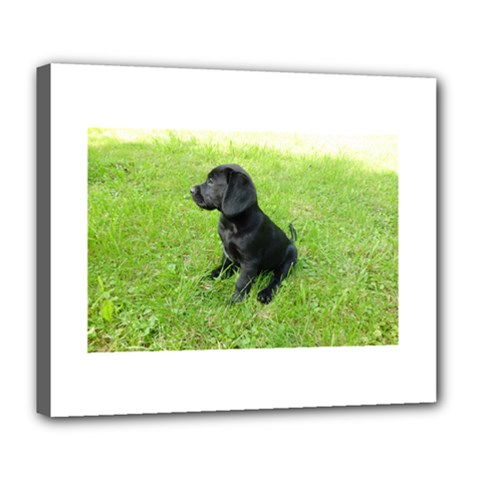 Black Lab Puppy Deluxe Canvas 24  x 20   by TailWags
