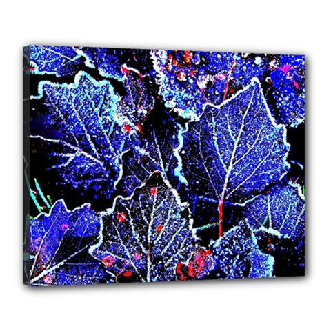 Blue Leaves In Morning Dew Canvas 20  X 16