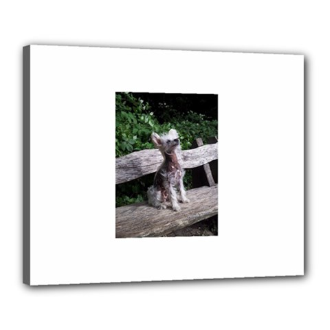 Chinese Crested Dog Sitting 2 Canvas 20  x 16  by TailWags