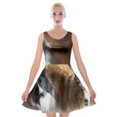 2 Shetland Sheepdogs Velvet Skater Dress by TailWags