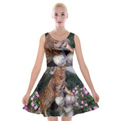 Bengal On Statue Velvet Skater Dress by TailWags