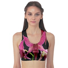 Orchid Flower Branch Pink Exotic Black Sports Bra by Jojostore