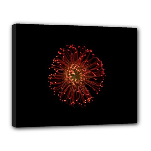 Red Flower Blooming In The Dark Canvas 14  X 11  by Onesevenart