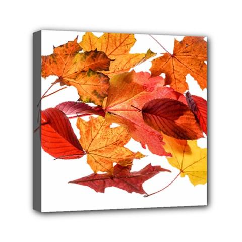 Autumn Leaves Leaf Transparent Mini Canvas 6  X 6  by Amaryn4rt