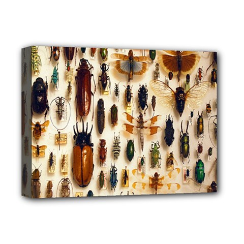 Insect Collection Deluxe Canvas 16  X 12   by Nexatart