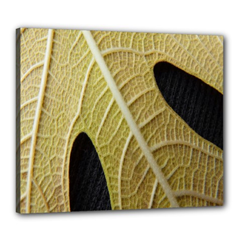 Yellow Leaf Fig Tree Texture Canvas 24  X 20  by Nexatart