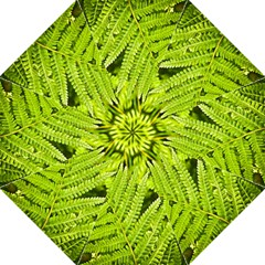 Fern Nature Green Plant Golf Umbrellas by Nexatart