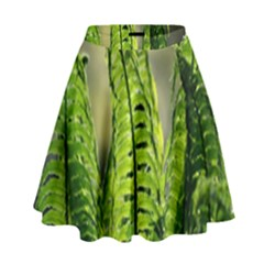 Fern Ferns Green Nature Foliage High Waist Skirt by Nexatart