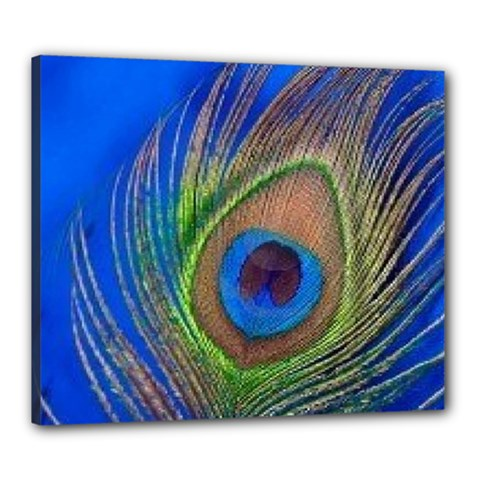 Blue Peacock Feather Canvas 24  X 20