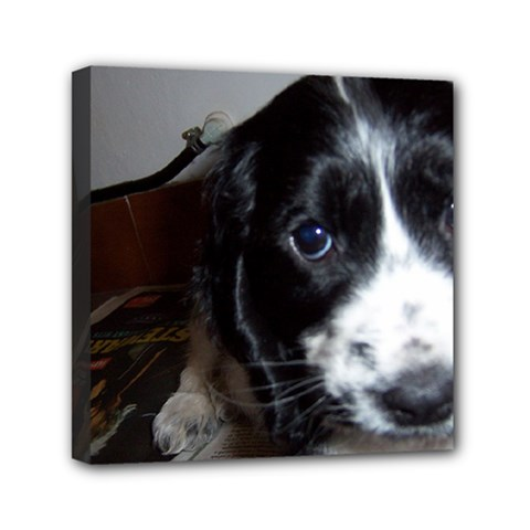 Black Roan English Cocker Spaniel Puppy Mini Canvas 6  x 6
