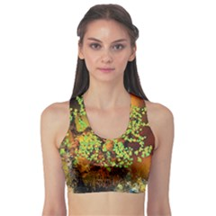 Backdrop Background Tree Abstract Sports Bra