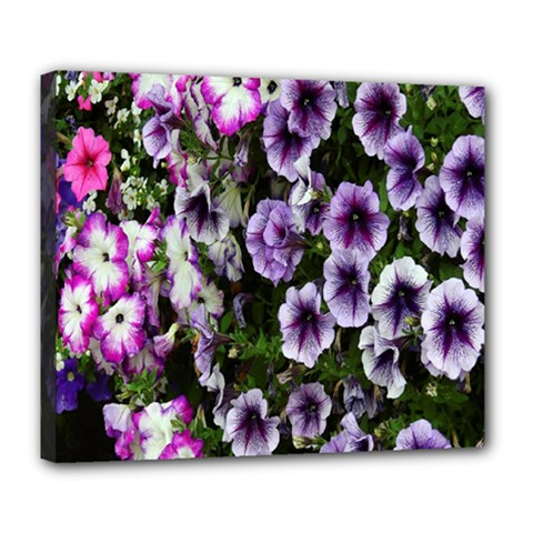 Flowers Blossom Bloom Plant Nature Deluxe Canvas 24  X 20