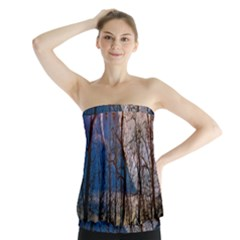 Full Moon Forest Night Darkness Strapless Top by Nexatart