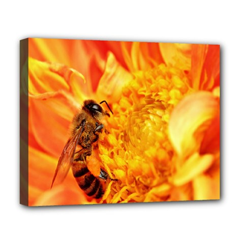 Honey Bee Takes Nectar Deluxe Canvas 20  X 16