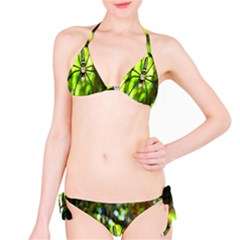 Spider Spiders Web Spider Web Bikini Set