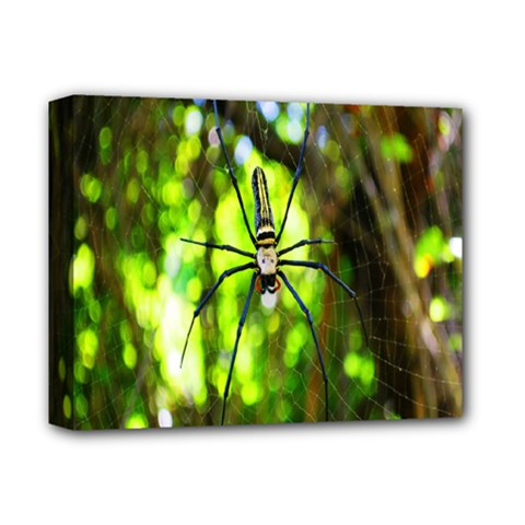 Spider Spiders Web Spider Web Deluxe Canvas 14  X 11