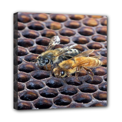 Worker Bees On Honeycomb Mini Canvas 8  X 8  by Nexatart