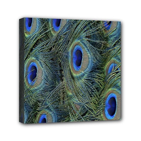 Peacock Feathers Blue Bird Nature Mini Canvas 6  X 6  by Amaryn4rt