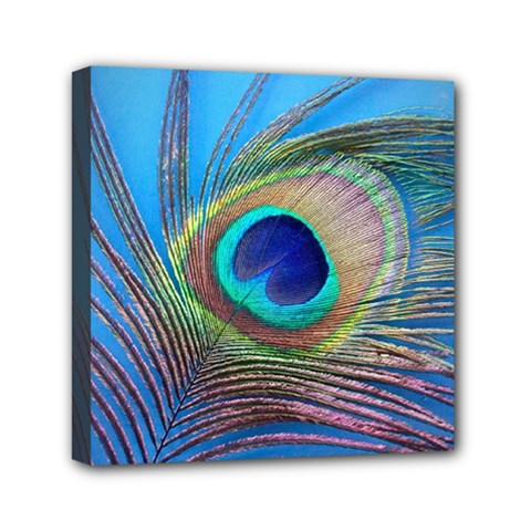 Peacock Feather Blue Green Bright Mini Canvas 6  X 6  by Amaryn4rt