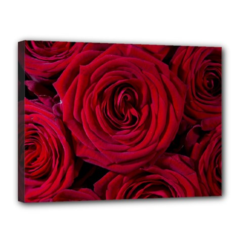 Roses Flowers Red Forest Bloom Canvas 16  x 12