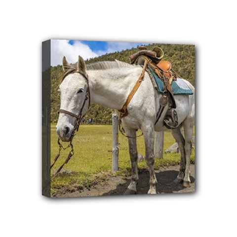 White Horse Tied Up At Cotopaxi National Park Ecuador Mini Canvas 4  X 4  by dflcprints