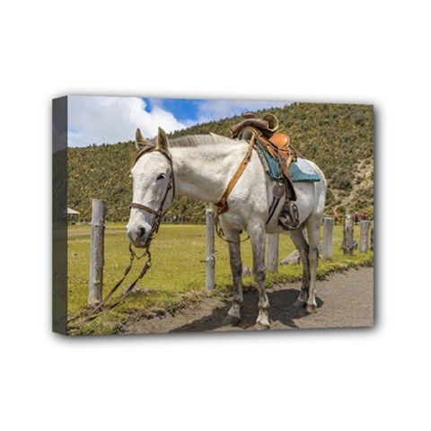 White Horse Tied Up At Cotopaxi National Park Ecuador Mini Canvas 7  X 5  by dflcprints