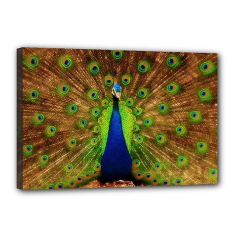 3d Peacock Bird Canvas 18  X 12  by Amaryn4rt