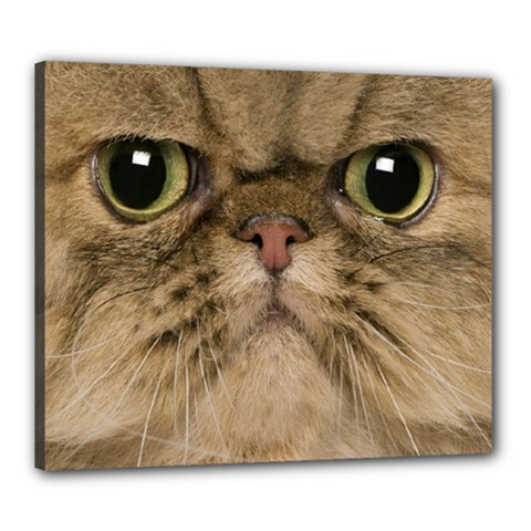 Cute Persian Cat Face In Closeup Canvas 24  X 20  by Amaryn4rt