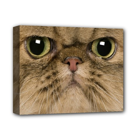 Cute Persian Cat Face In Closeup Deluxe Canvas 14  X 11  by Amaryn4rt