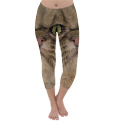 Cute Persian Cat Face In Closeup Capri Winter Leggings  by Amaryn4rt