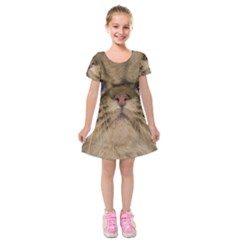 Cute Persian Cat Face In Closeup Kids  Short Sleeve Velvet Dress by Amaryn4rt