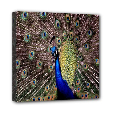 Multi Colored Peacock Mini Canvas 8  X 8  by Simbadda