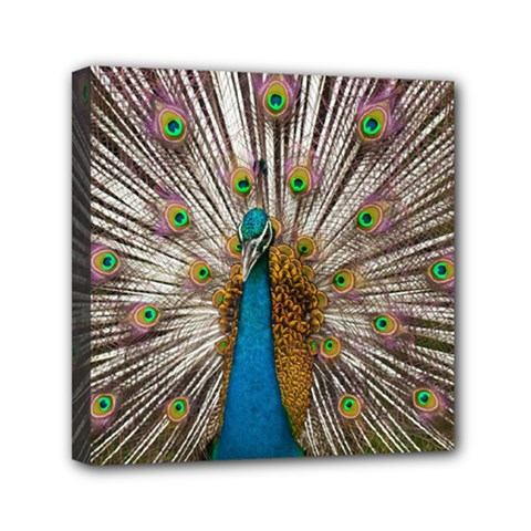 Indian Peacock Plumage Mini Canvas 6  X 6  by Simbadda