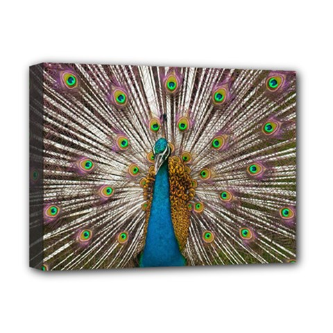 Indian Peacock Plumage Deluxe Canvas 16  X 12   by Simbadda