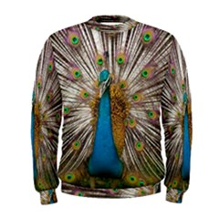 Indian Peacock Plumage Men s Sweatshirt
