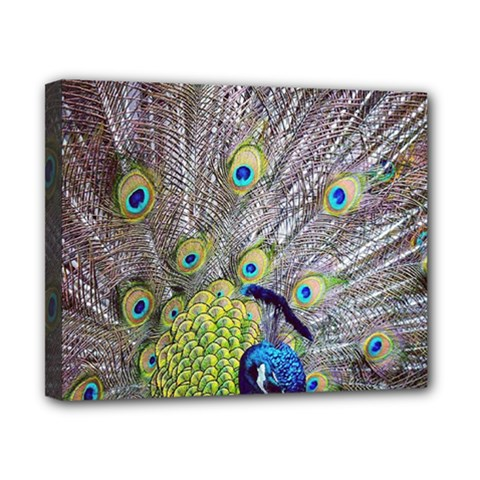 Peacock Bird Feathers Canvas 10  X 8  by Simbadda