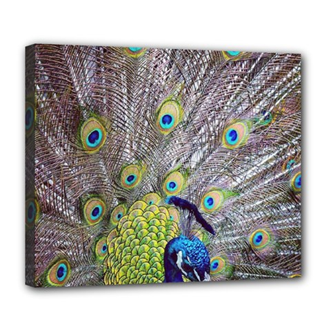 Peacock Bird Feathers Deluxe Canvas 24  X 20   by Simbadda