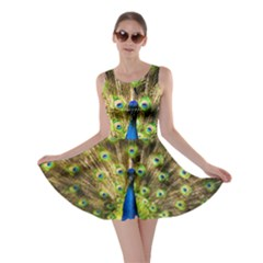 Peacock Bird Skater Dress