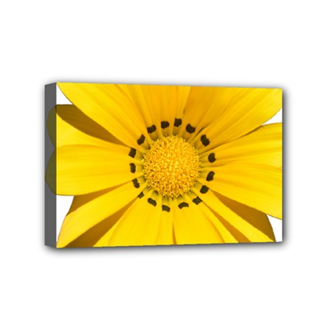 Transparent Flower Summer Yellow Mini Canvas 6  X 4  by Simbadda