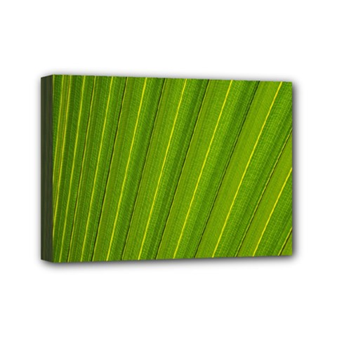 Green Leaf Pattern Plant Mini Canvas 7  X 5  by Onesevenart