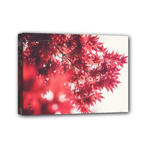 Maple Leaves Red Autumn Fall Mini Canvas 7  X 5  by Onesevenart